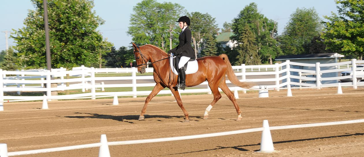english-horse-riding
