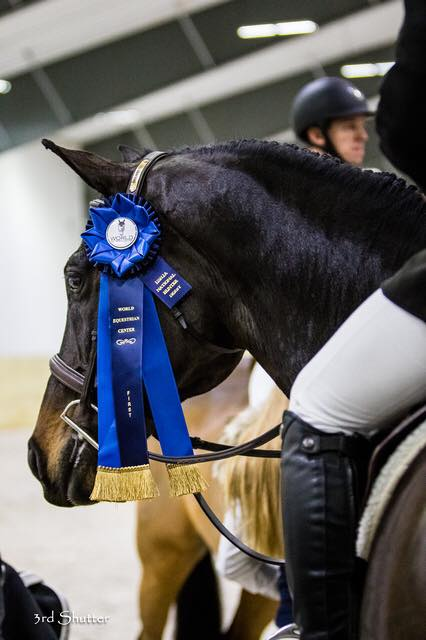 World Equestrian Center Introduces New Wec Points System