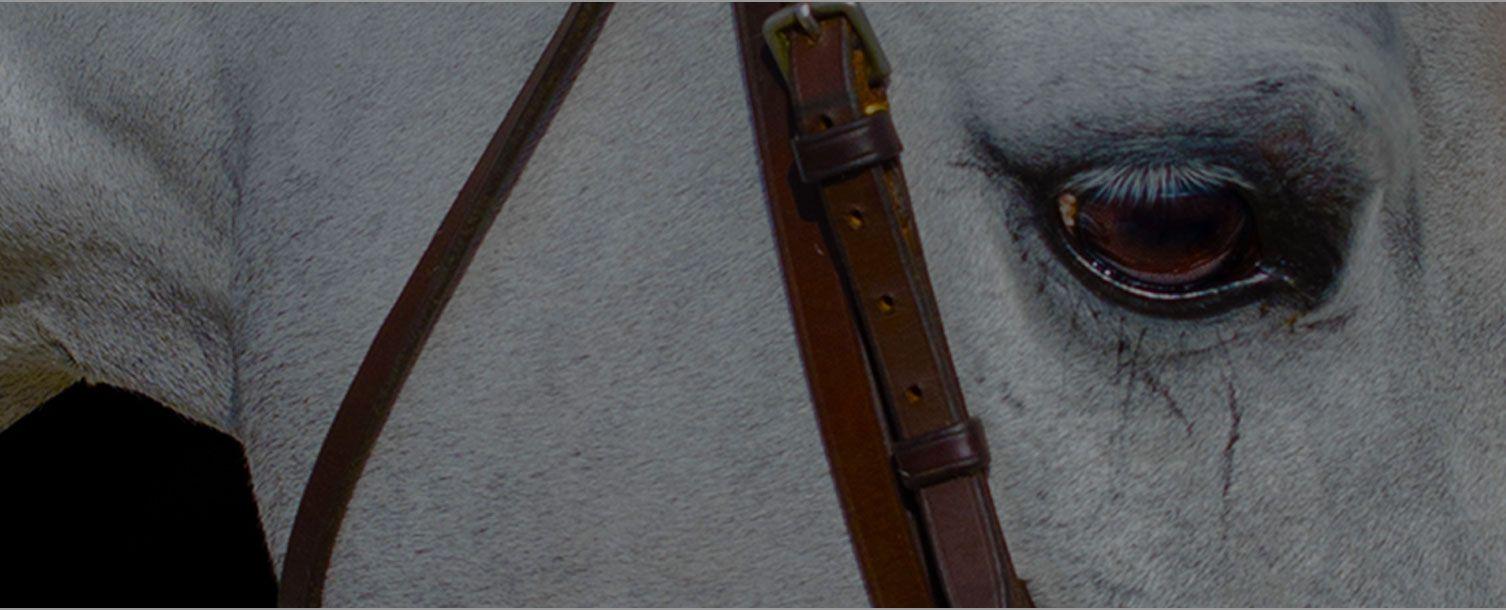 Ocala Fl World Equestrian Center
