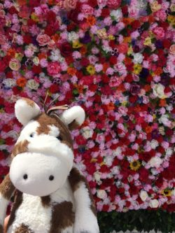 Sandy at the Wall of Flowers
