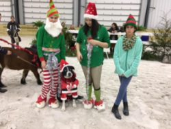 Elves and dog