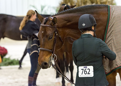 World Equestrian Center Members Show Results Wec