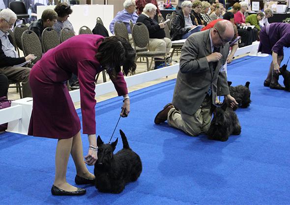 Ocala Canine Shows