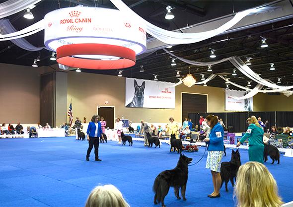 wilmington equestrian dog show competition venue